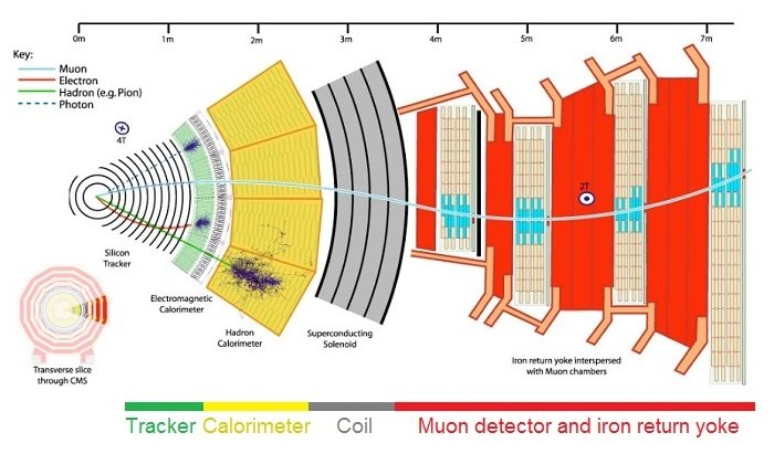 Diagram of the CMS, showing the tracker, calorimeter, coil, muon detector, and iron return yoke.