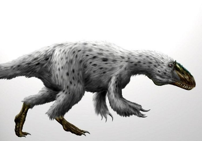 Artist's impression of a feathered dinosaur.