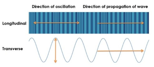 Diagram showing that transverse waves oscillate in a direction that is perpendicular to longitudinal waves.
