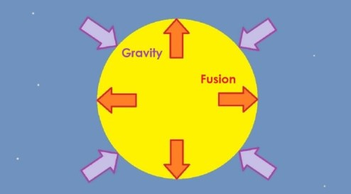 Diagram showing that in a star, there is a balance between the outwards force due to fusion, and the inwards force due to gravity.